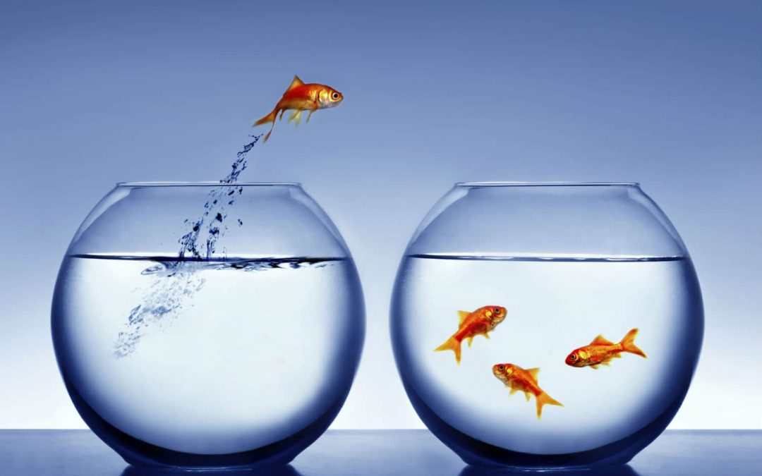 You have a shorter attention span than a goldfish! Brand messaging is now more important than ever.